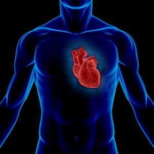 Poskrbimo, da bo naše srce zdravo